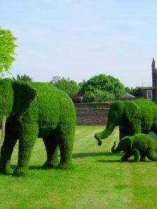 A Topiary Zoo