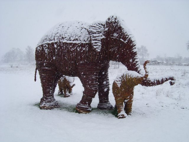 elephants in snow 023