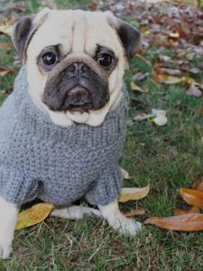 Stylish pug…