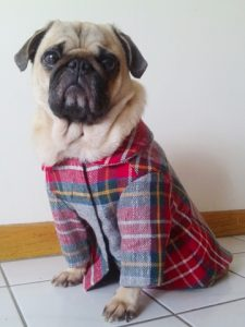 Pooches in Plaid