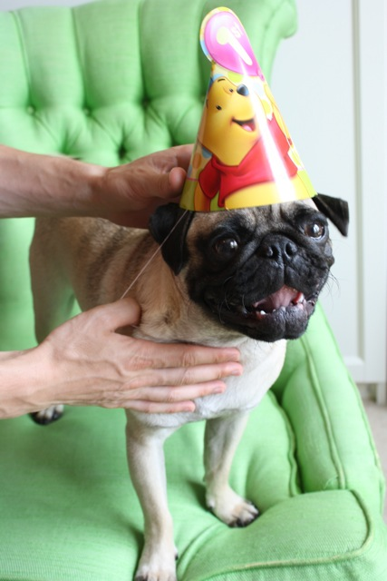 Alfred-The-Pug-First-Birthday-Hat-2