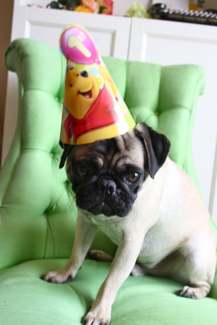 Alfred-The-Pug-Happy-First-Birthday-Hat