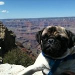 Alfred at the Grand Canyon