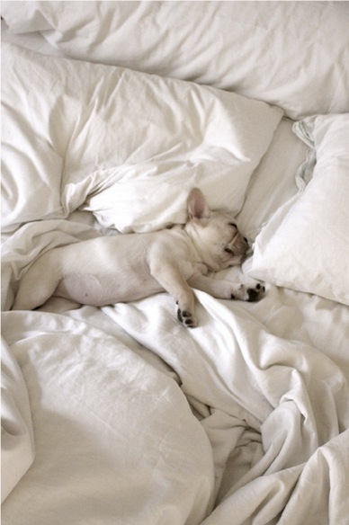 french-bulldog-bed-sheets-cuddling