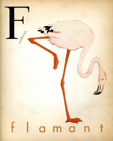 french-alphabet-print-2-vintage-flamingo-illustration-print