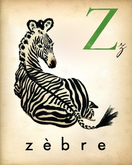 french-alphabet-print-3-vintage-zebra-ilustration