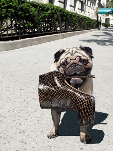 Vogue Loves Pugs