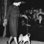The Duchess of Windsor's Pugs
