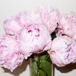 Peonies by Terry Richardson
