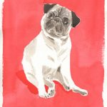 Alfred the Pug by Caitlin McGauley