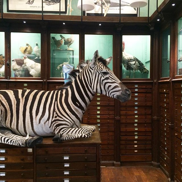 deyrolle-paris-france-taxidermy-store-museum-katie-armour-taylor