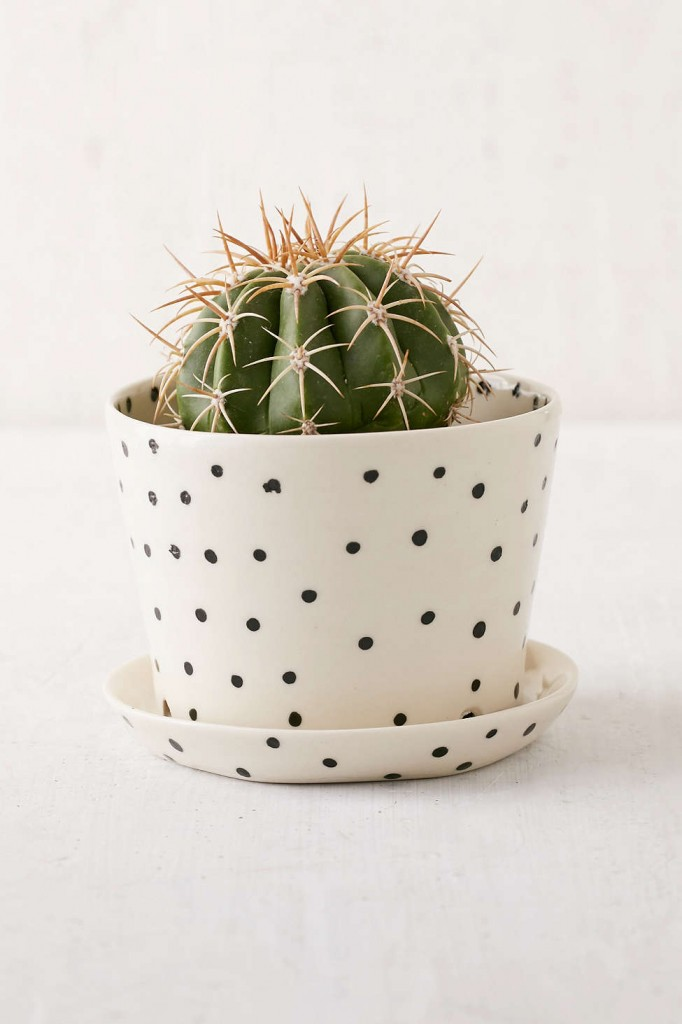 black-white-ceramic-polka-dot-planter