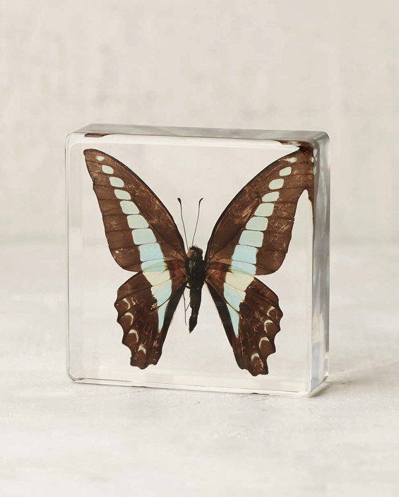 butterfly-lucite-acrylic-paperweight-sculpture