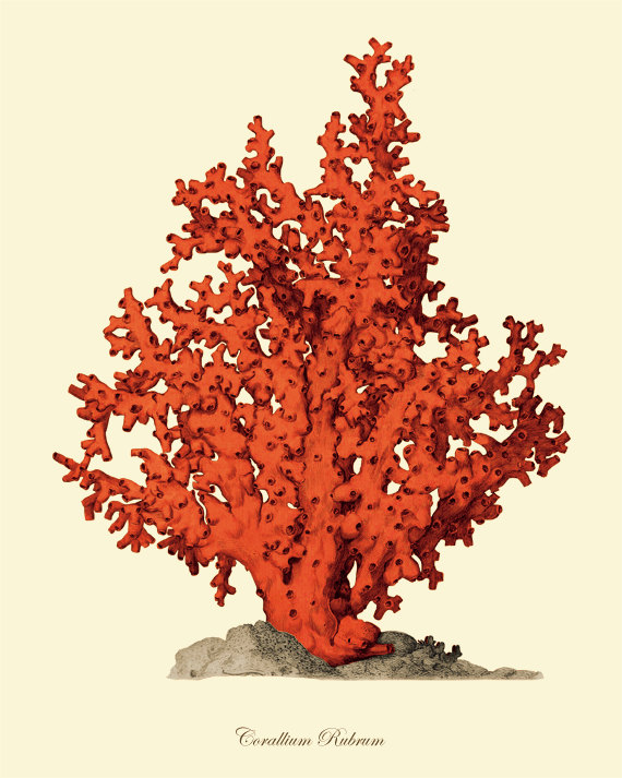 antique-wall-art-etsy-red-coral-branch-2