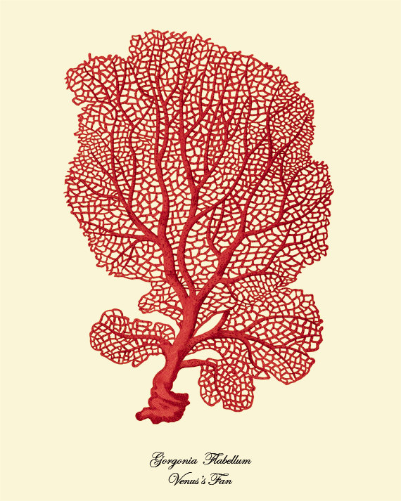 antique-wall-art-etsy-red-coral-sea-fan