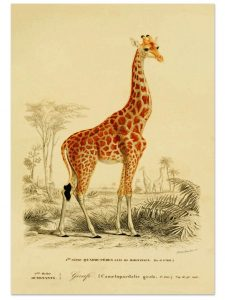 Best of Etsy: Antique Animal Prints