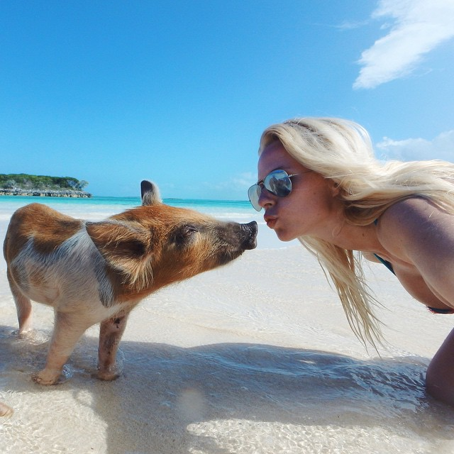 Pig Beach, Big Major Cay, Bahamas