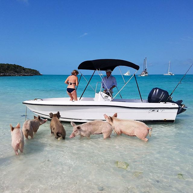 Pig-Beach-Swimming-Big-Major-Cay-Bahamas-11