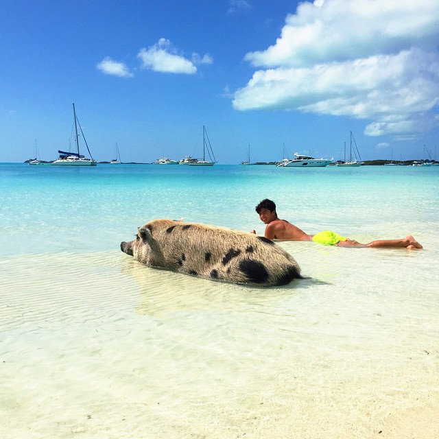 Pig-Beach-Swimming-Big-Major-Cay-Bahamas-3