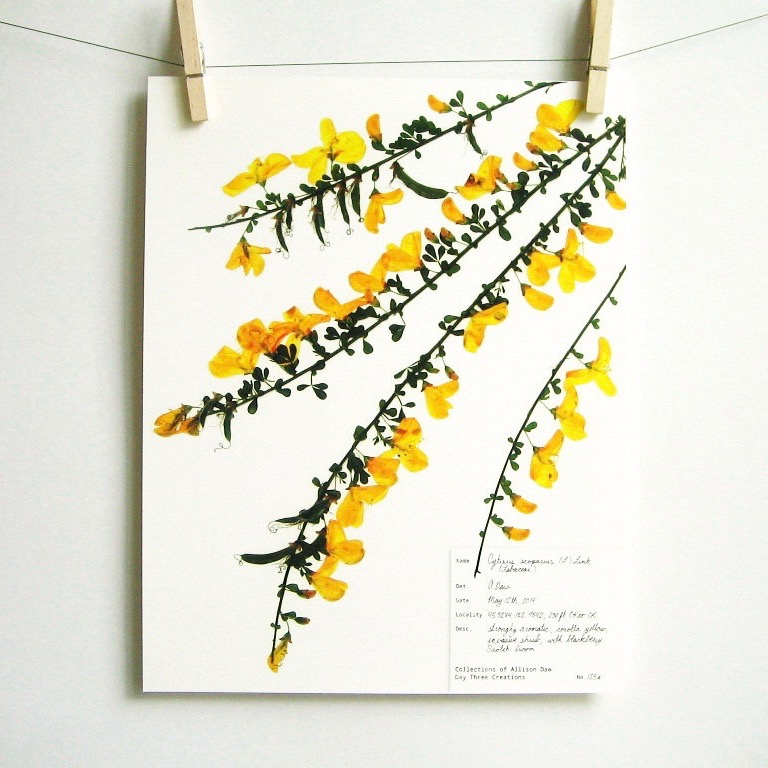 botanical-plant-prints-day-three-creations-1