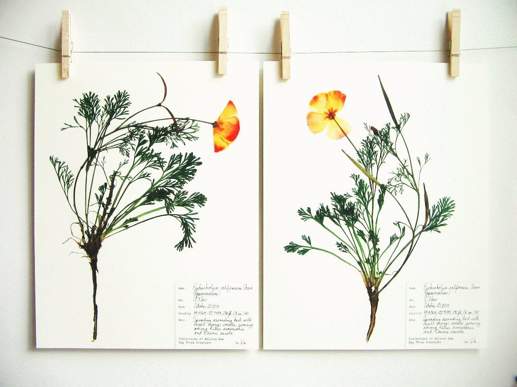 botanical-plant-prints-day-three-creations-10