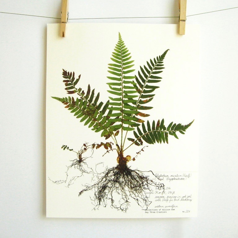 botanical-plant-prints-day-three-creations-11