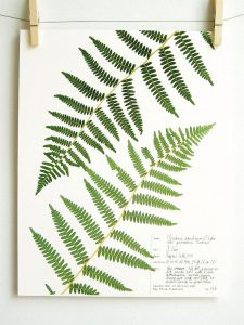 Best of Etsy: Botanical Prints by Day Three Creations
