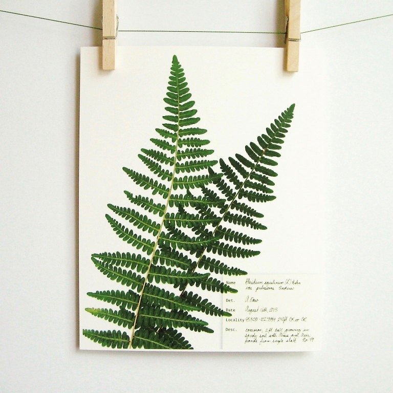 botanical-plant-prints-day-three-creations-3