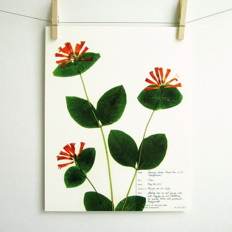 botanical-plant-prints-day-three-creations-4