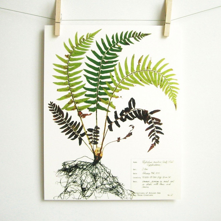 botanical-plant-prints-day-three-creations-5
