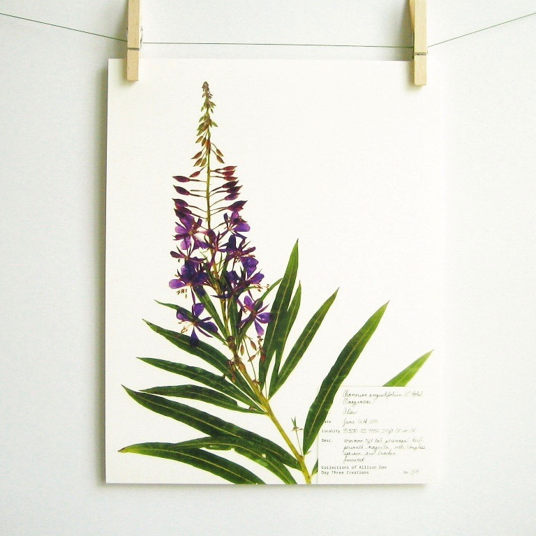 botanical-plant-prints-day-three-creations-6