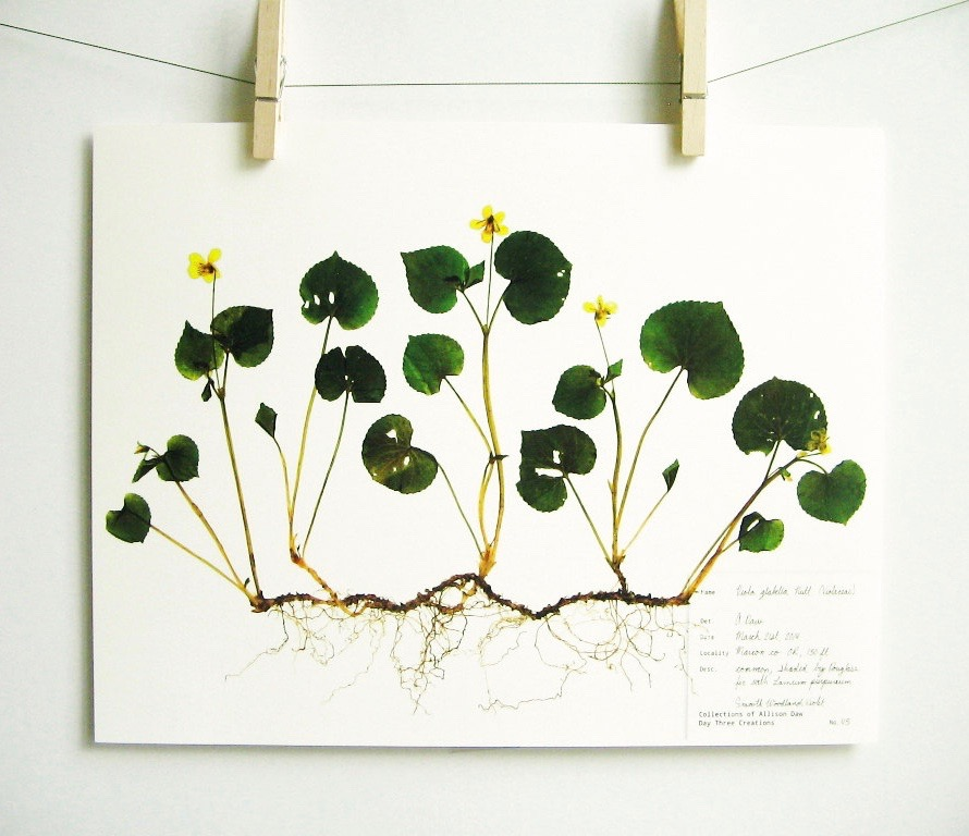 botanical-plant-prints-day-three-creations-7