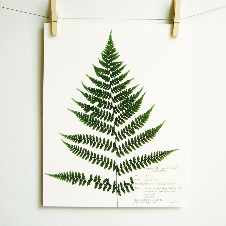 botanical-plant-prints-day-three-creations-9