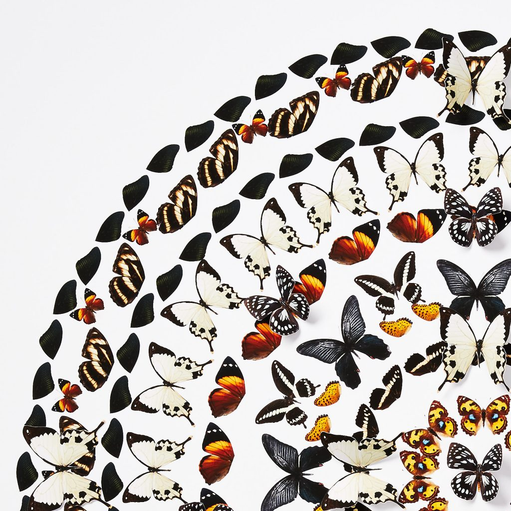 butterfly-art-dawn-wolfe-collage-5