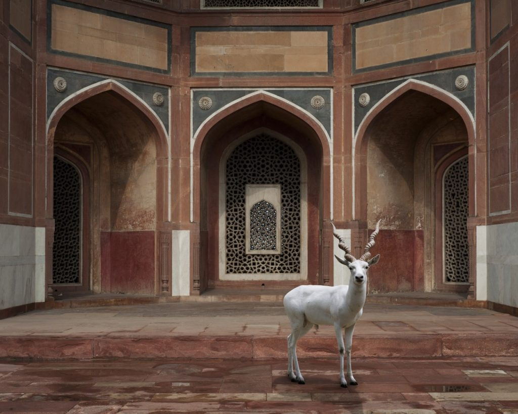 india-song-karen-knorr-photography-10