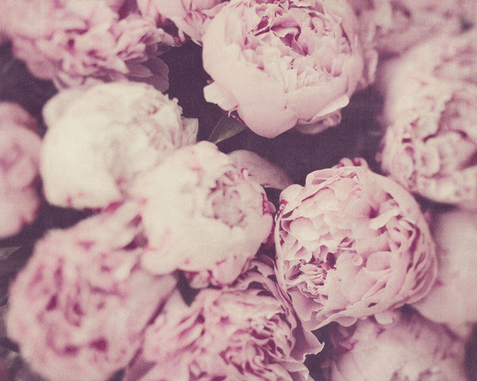 peonies-art-print-irene-suchocki-eye-poetry-photography-etsy-1