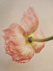 Artist Spotlight: Floral Photography by Paul Munro