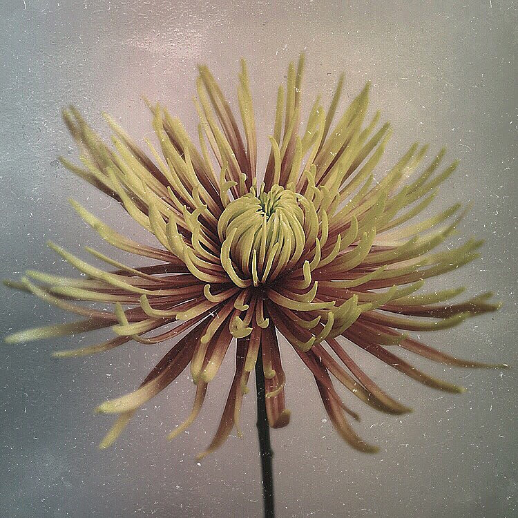 paul-munro-floral-photograph-4