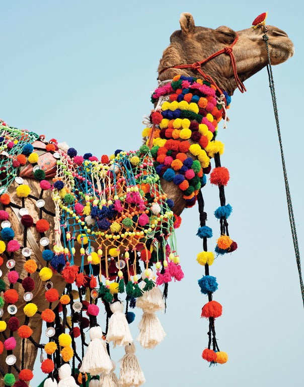 annual-pushkar-camel-fair