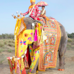 Jaipur's Painted Elephants