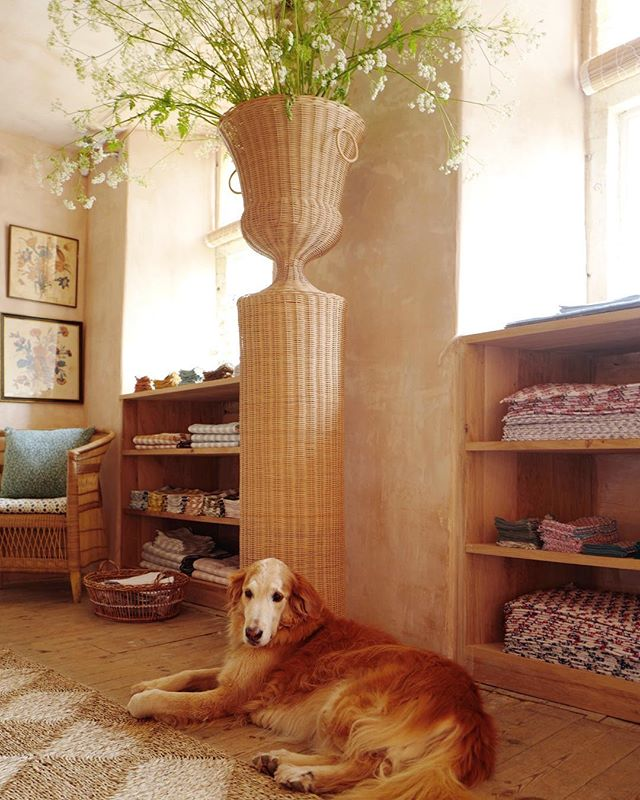 Amanda Brooks' new Cotswolds boutique, Cutter Brooks, in Stow-on-the-Wold, England. Golden Retriever. Wicker pedestal and urn by Atelier Vime. Sisal rug.