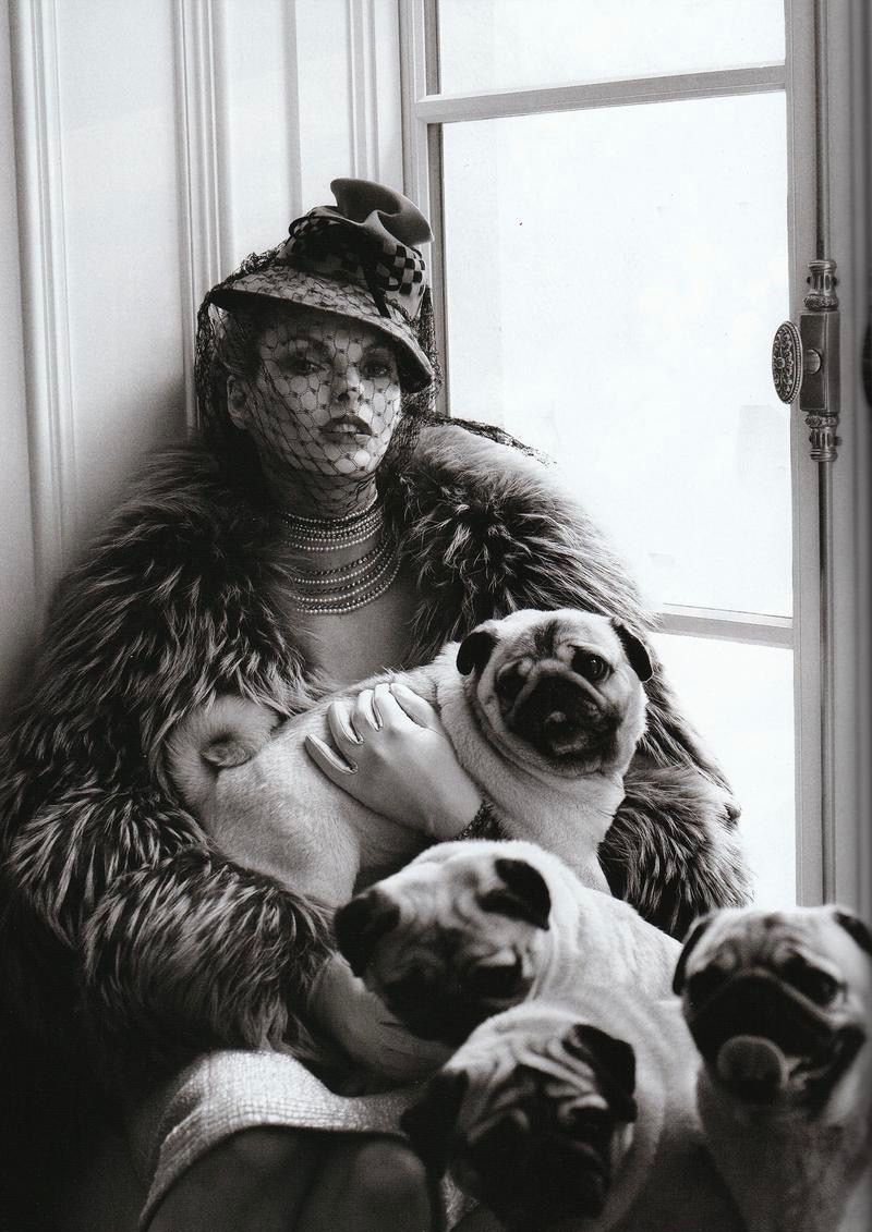 Pugs in Vogue Linda Evangelista