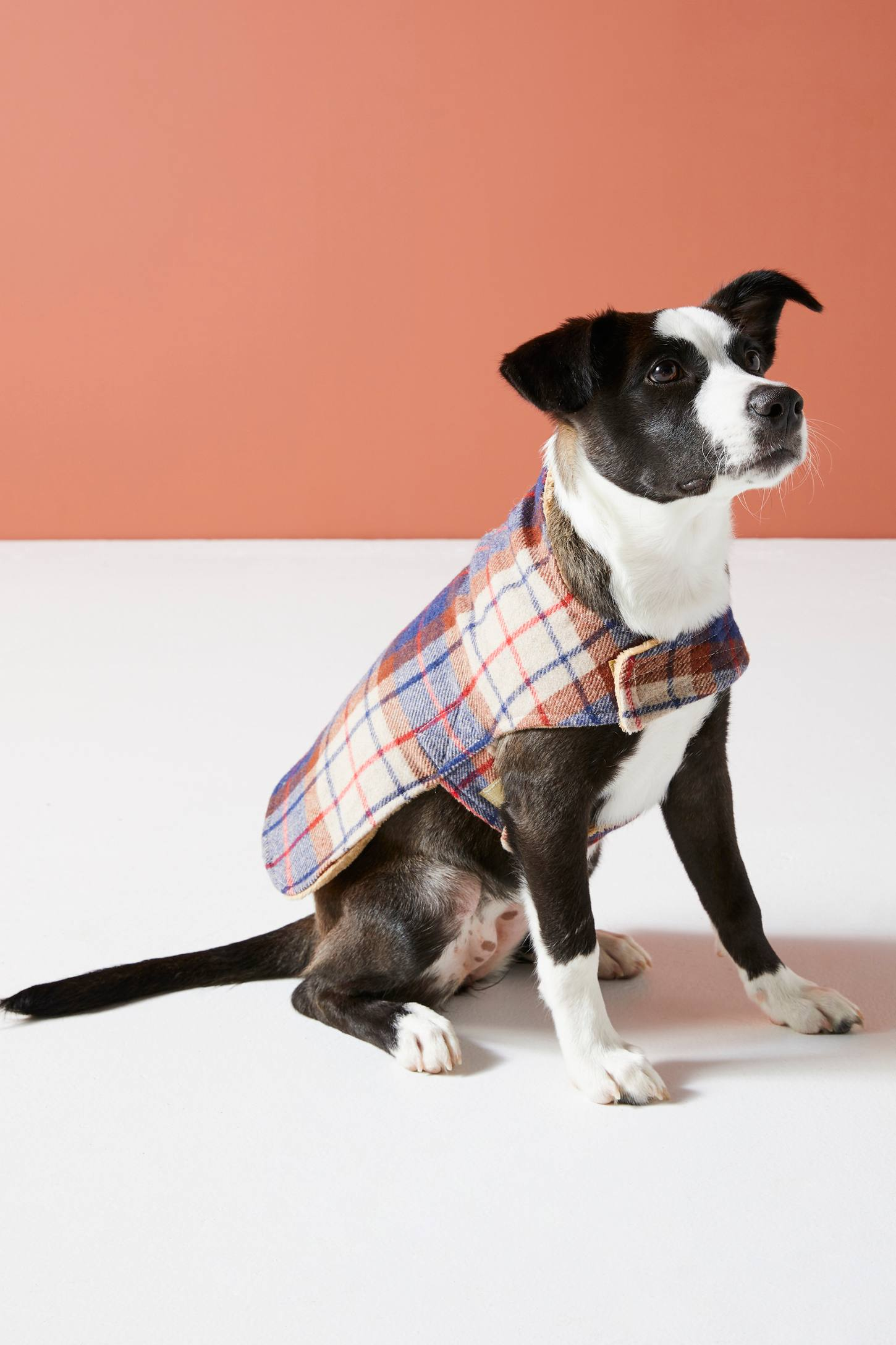 Porter Plaid Dog Jacket