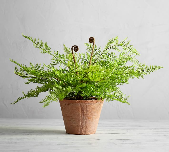 Faux Potted Fiddle Fern