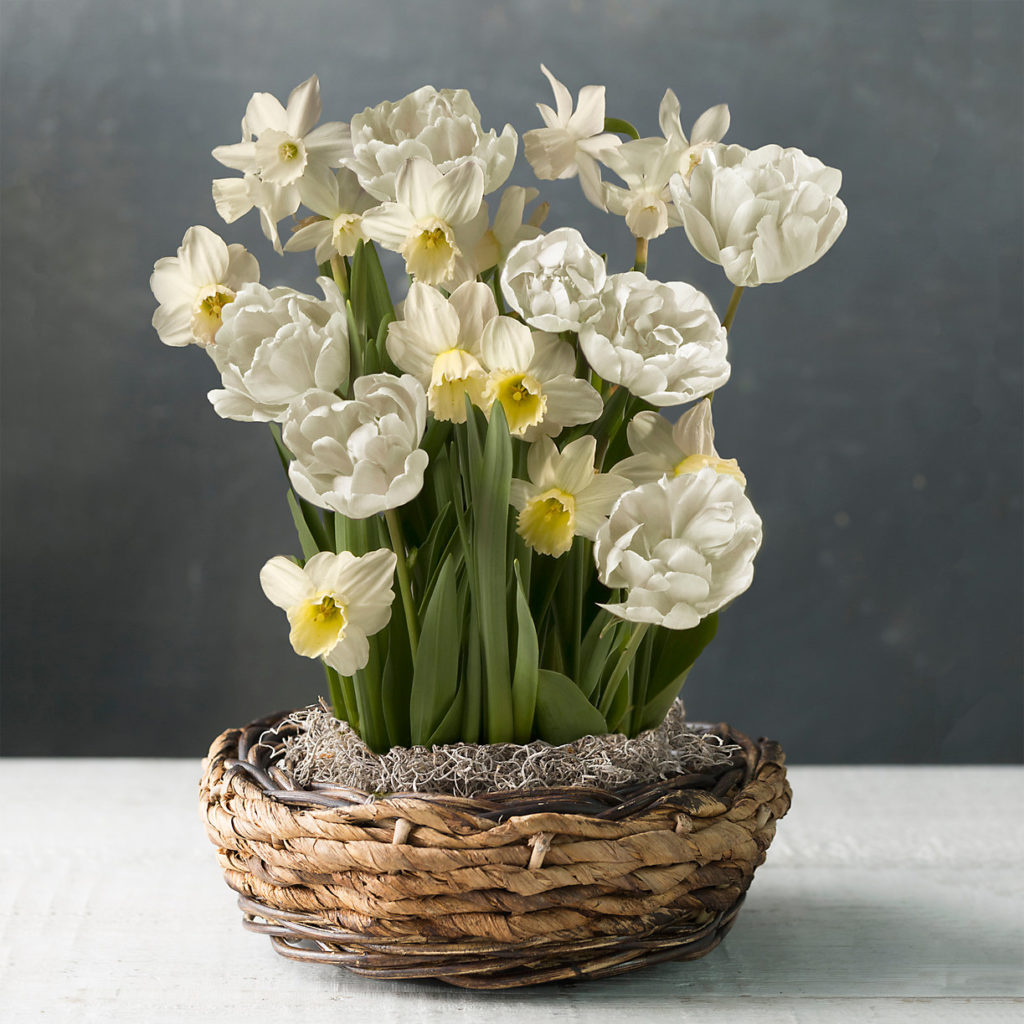 White Daffodil and Tulip Mix