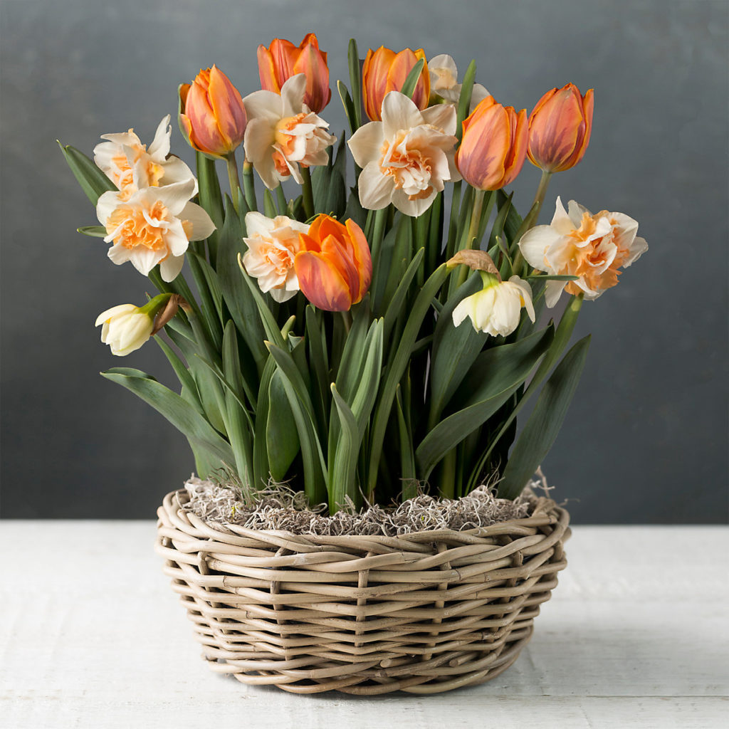 White and Orange Daffodil and Tulip Mix
