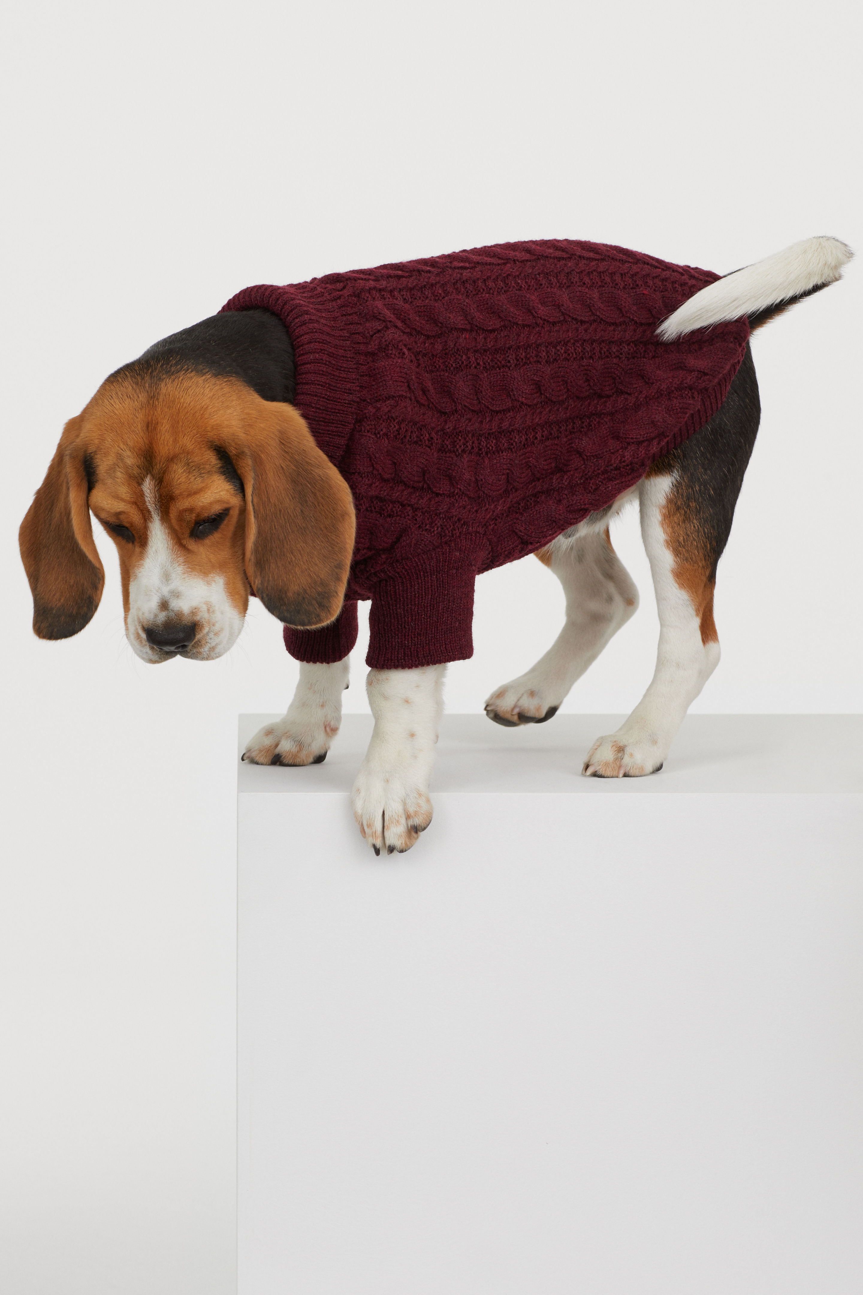 Burgundy Cable Knit Dog Sweater