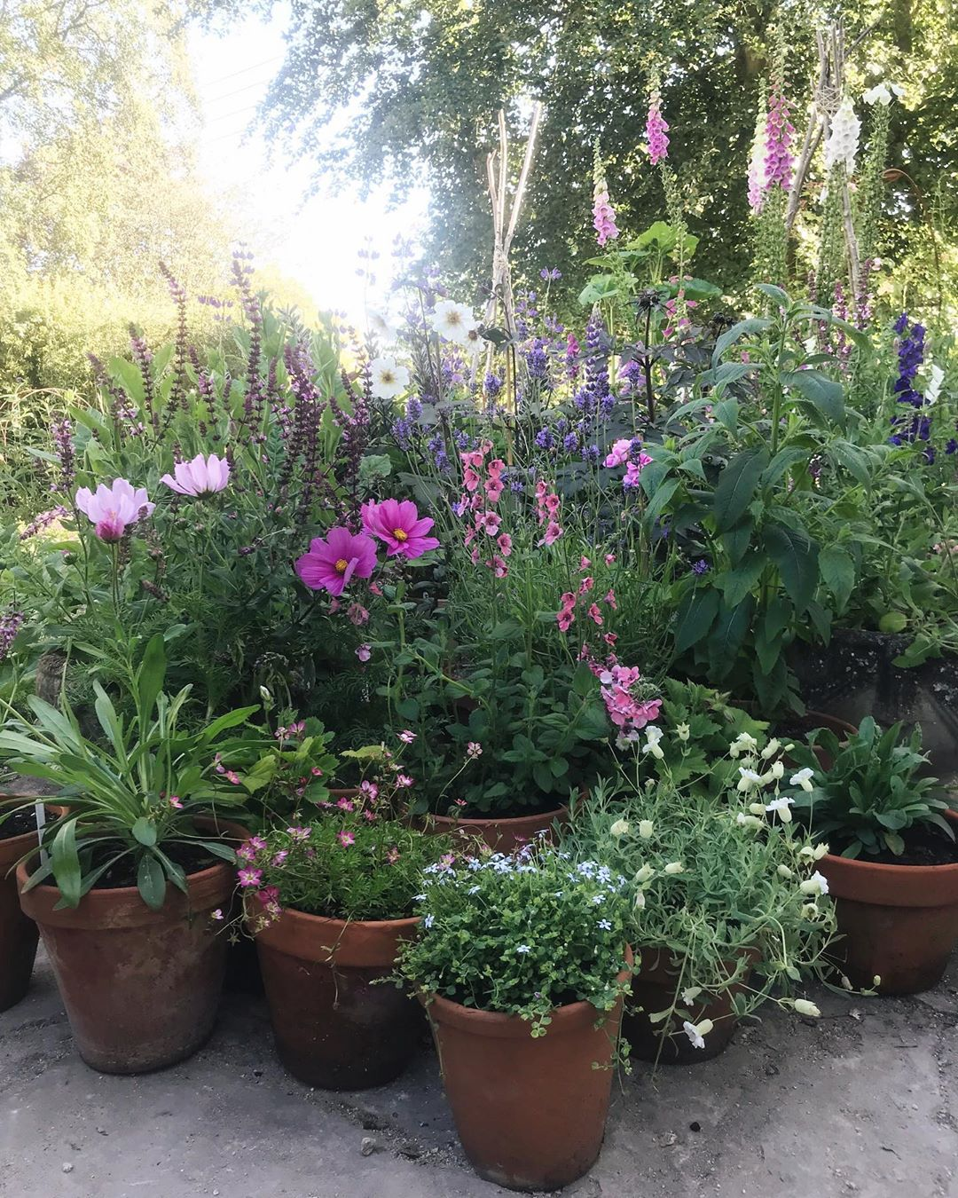 Sean Anthony Pritchard Garden with Terracotta Planters