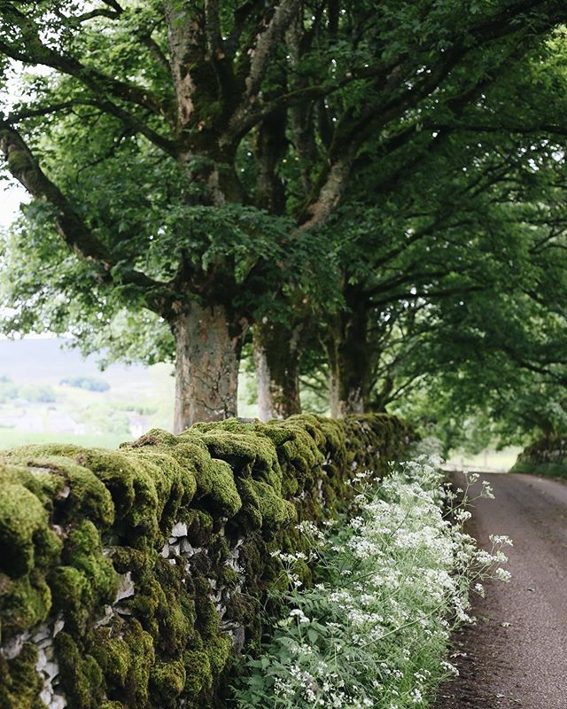 English countryside road with trees and stone wall