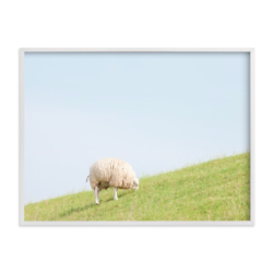 Sheep at Lunch Print